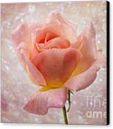 Champagne Rose. Canvas Print by Clare Bambers