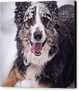 Chasing The Snow Canvas Print by Joye Ardyn Durham
