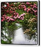 Chatsworth Tree Canvas Print by Chris Jones