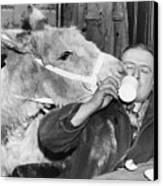 Cheeky Donkey Canvas Print by Fox Photos