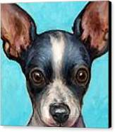 Chihuahua Puppy With Big Ears Canvas Print