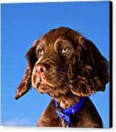 Chocolate Brown Cocker Spaniel Puppy Canvas Print