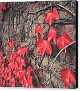 Clinging Canvas Print by Laurie Search