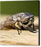 Close Encounter With A Horsefly Canvas Print by Dean Bennett