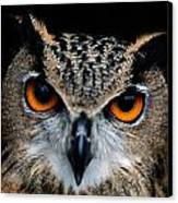 Close Up Of An African Eagle Owl Canvas Print