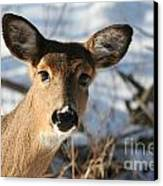 Close Up Of Deer In A Snowy Wooded Setting Canvas Print by Christopher Purcell