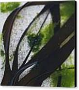 Close-up Of Seaweed In Water Canvas Print