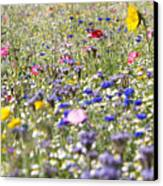 Close Up Of Vibrant Wildflowers In Sunny Field Canvas Print
