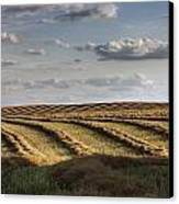 Clouds Over Canola Field On Farm Canvas Print