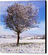 Co Antrim, Ireland Hawthorn Tree Known Canvas Print by The Irish Image Collection
