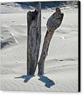 Coastal Driftwood Art Prints Ocean Shore Sand Beach Canvas Print
