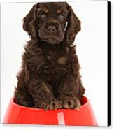 Cocker Spaniel Pup In Doggy Dish Canvas Print by Mark Taylor