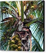 Coconut Palm Inflorescence Canvas Print by Karon Melillo DeVega