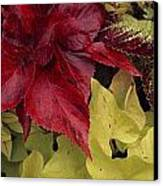 Coleus And Other Plants In A Window Box Canvas Print