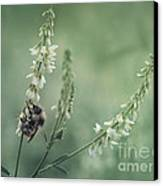 Collecting The Summer Canvas Print by Priska Wettstein