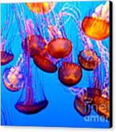Colorful Jellies Canvas Print by Ellen Heaverlo