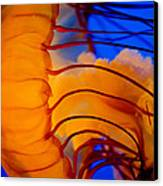 Colours Of The Jelly Fish 3 Canvas Print