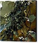Concord Grapes Canvas Print by Heather Grow