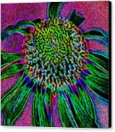 Coneflower Canvas Print by Simone Hester