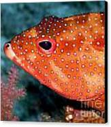 Coral Cod's Head Canvas Print by Serena Bowles