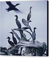 Cormorants Fly Above Driftwood, Grey Canvas Print by Leanna Rathkelly