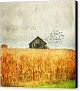 Corn Fields Of Kentucky Canvas Print by Darren Fisher