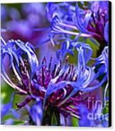 Cornflower Color Canvas Print