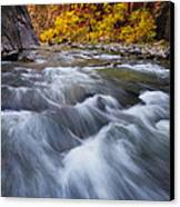 Cottonwood Row Canvas Print by Joseph Rossbach