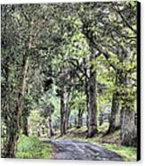 County Roads Canvas Print by JC Findley