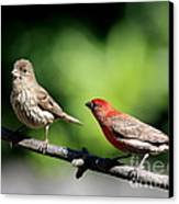 Courtship In Nature . 40d8073 Canvas Print by Wingsdomain Art and Photography