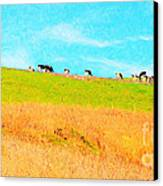 Cows On A Hill . 40d3430 . Painterly . Long Cut Canvas Print by Wingsdomain Art and Photography