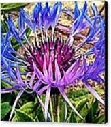 Crowned Beauty Canvas Print by Kevin D Davis