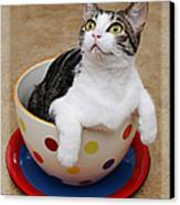 Cup O Tilly 2 Canvas Print by Andee Design