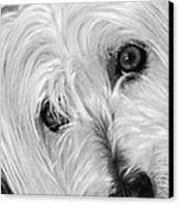 Cute Dog Canvas Print by Imagevixen Photography