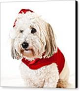 Cute Dog In Santa Outfit Canvas Print by Elena Elisseeva