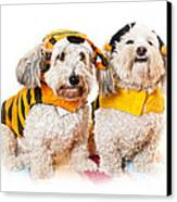Cute Dogs In Halloween Costumes Canvas Print by Elena Elisseeva