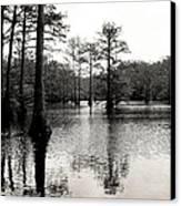 Cypress Trees In Louisiana Canvas Print