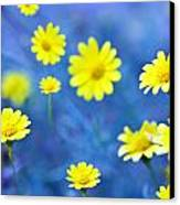 Daisies On Blue Canvas Print by Al Hurley