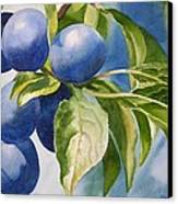 Damson Plums Canvas Print by Sharon Freeman