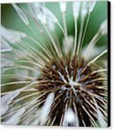 Dandelion Tears Canvas Print by Paul Ward