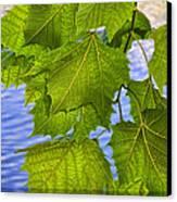 Dangling Leaves Canvas Print by Deborah Benoit