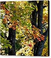 Dazzling Days Of Autumn Canvas Print by Will Borden