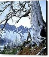 Dead Spruce In Old Forest Fire, Nabob Canvas Print