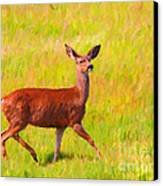 Deer In The Meadow Canvas Print by Wingsdomain Art and Photography