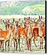 Deers Canvas Print by MotHaiBaPhoto Prints
