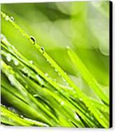 Dewy Green Grass  Canvas Print by Elena Elisseeva