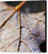 Dewy Leaf Canvas Print by Elena Elisseeva