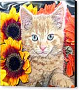 Di Milo - Sun Flower Kitten With Blue Eyes - Kitty Cat In Fall Autumn Colors With Gerbera Flowers Canvas Print