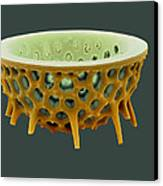 Diatom, Sem Canvas Print by David Mccarthy