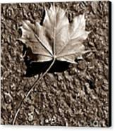 Dipped In Bronze Canvas Print